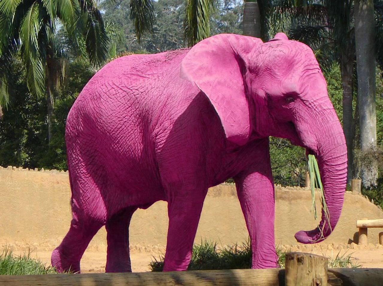 teste hipnose elefante rosa